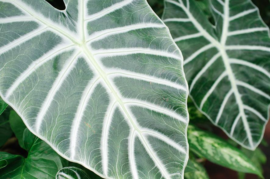 foliage 5